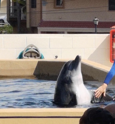 Nicholas at Clearwater Marine Aquarium